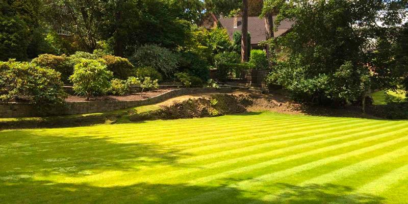 Що вибрати для стрижки газону