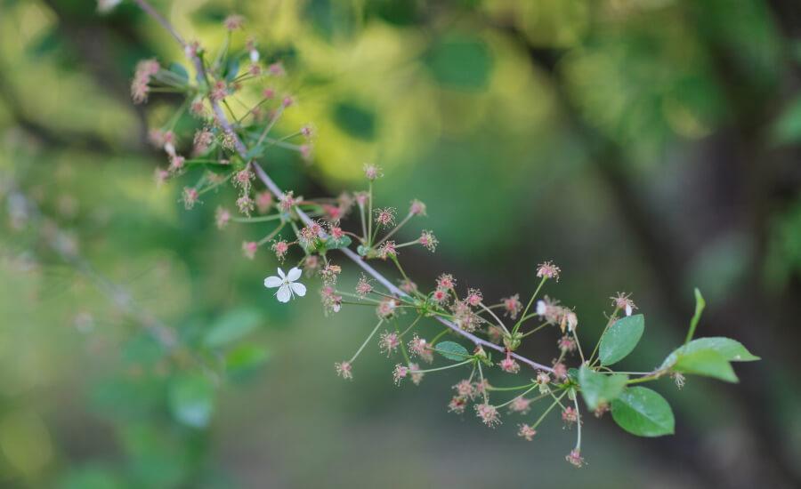Завершение периода цветения